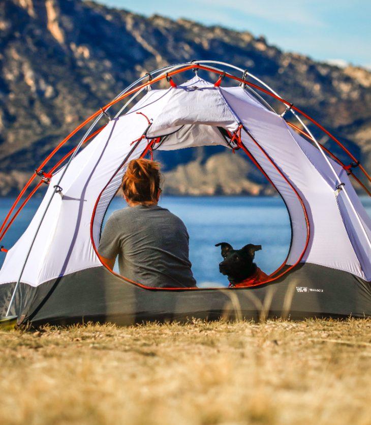 campeggiare con il cane