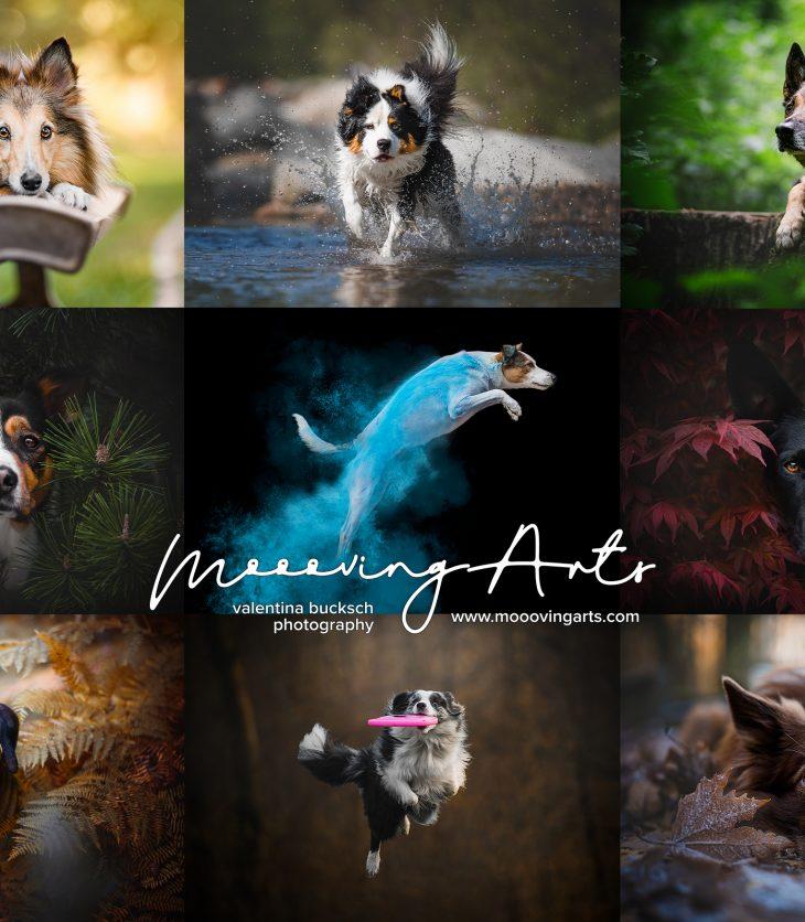 Moooving Arts - servizi fotografici