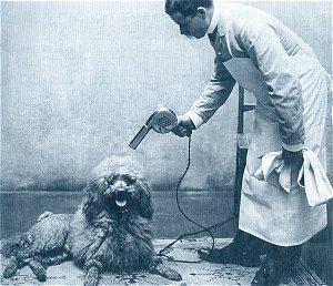 Storia della toelettatura per cani