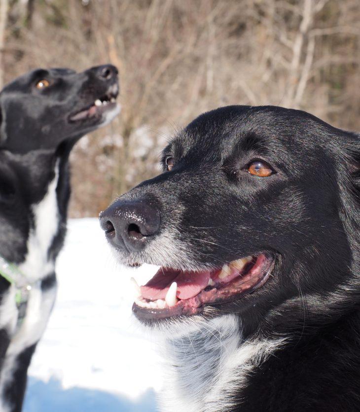Paura dei cani 2