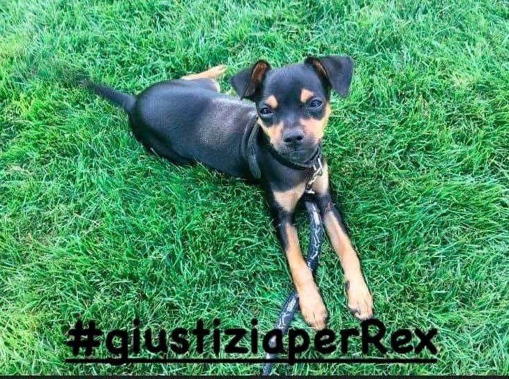 giustizia per REX