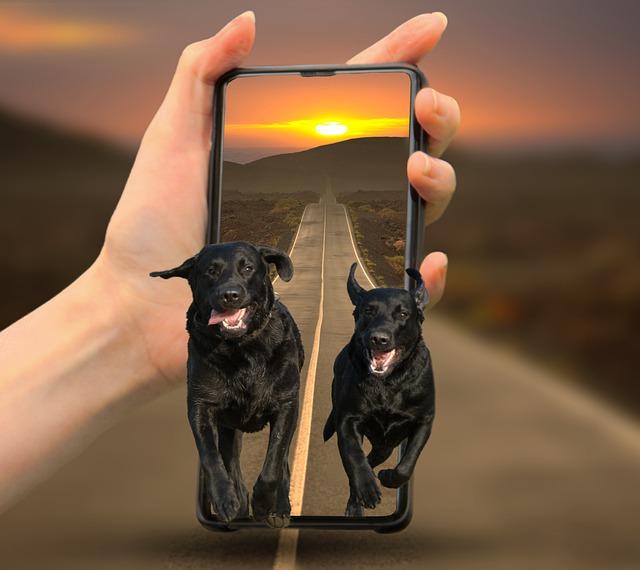 App Cani