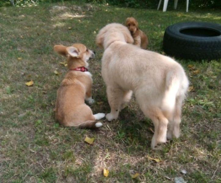 Mondocane corso cuccioli